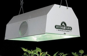 hydroponic marijuana hid light